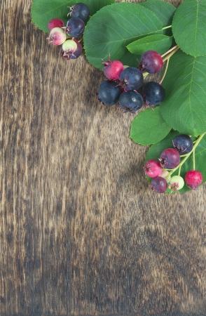 sugarplum: Bunch of first wild autumn berry in front of dark wooden background Stock Photo