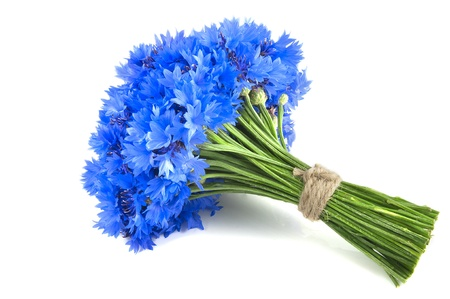 Bunch of flower, wild vivid big blue cornflower and small green bud isolated  Symbol of romantic and tender  photo