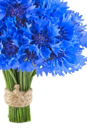 bachelor s button: Bunch of flower, wild vivid big blue cornflower and small green bud isolated  Symbol of romantic and tender