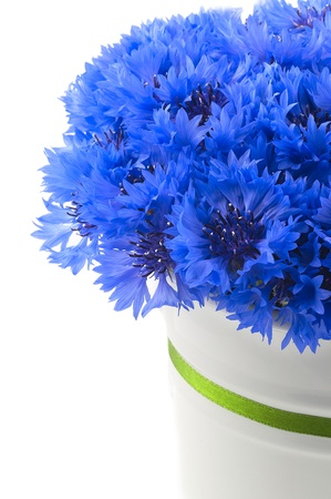 A bunch of beautiful summer flower of Cornflower in the white bucket with green ribbon isolated  Concept of romantic Stok Fotoğraf - 21527709