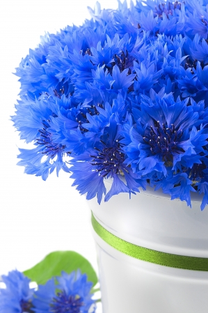 A bunch of beautiful summer flower of Cornflower in the white bucket with green ribbon isolated  Concept of romantic