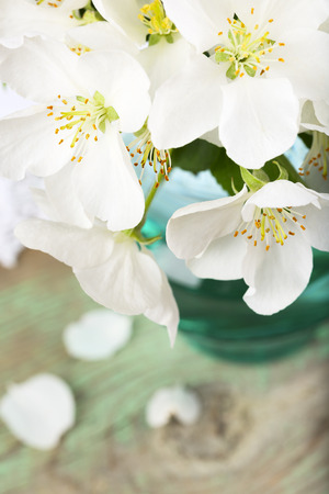 White apple tree flowers photo