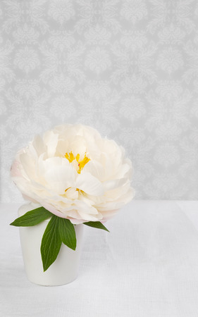 White peony flower in a small vase, grey background, vintage style photo