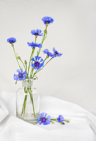 Bouquet of beautiful Cornflowers in a vase photo