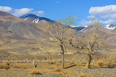 altay: Altay, Golden Mountains