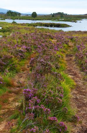 heather: Heather trail, Scotland