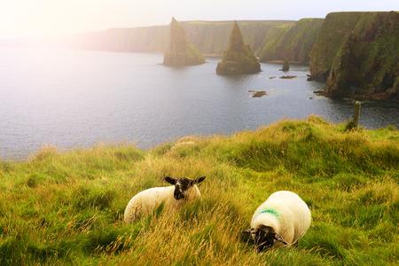 Industria della lana Scozia Archivio Fotografico - 67645570