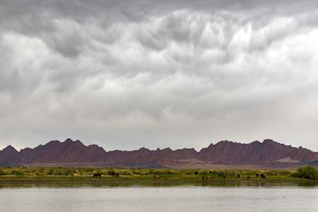 Paesaggio tropicale mongolo con mandria di cavalli ad un irrigazione Archivio Fotografico - 76109857