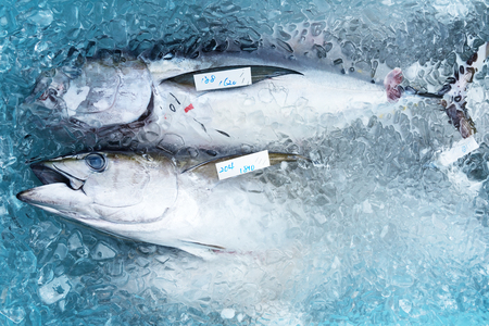 Fresh catch of tuna is packaged in a container with ice. Preparation for delivery to local markets. 免版税图像 - 84784353