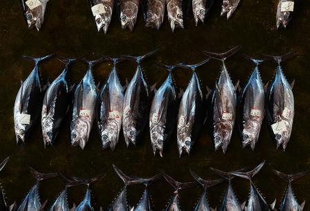 Tuna auction, Japan