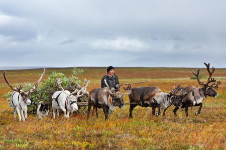 Il pastore nomade guida la slitta con legna da ardere in un campo. Archivio Fotografico - 90884950