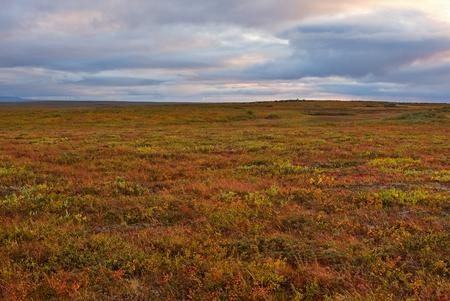 Tundra Archivio Fotografico - 91395629