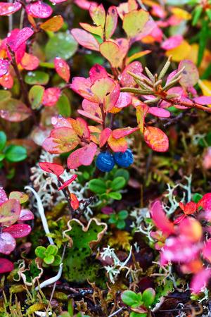 Tundra colorata della giungla Archivio Fotografico - 89985749