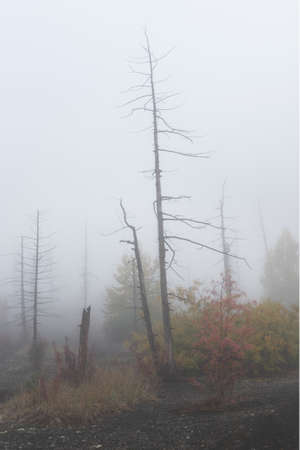 The Dead Forest of Tolbachik. Dead Forest is a result of eruptions of Tolbachik volcanic complex in the Kamchatka peninsula of Russian Far East region