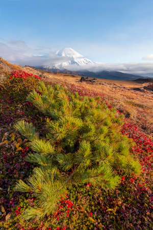 Tolbachik. It is a volcanic complex on the Kamchatka Peninsula in the far east of Russia. Early autumn colors slopes on mountain range in bright yellow.