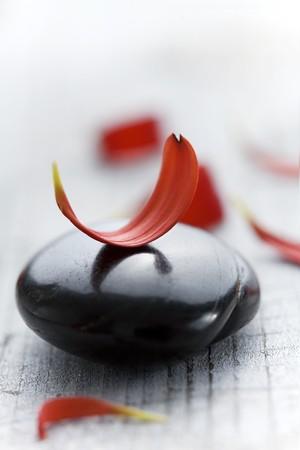volcanic: red flower petals on black volcanic rock