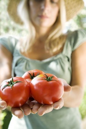 tomatos: shallow doffocus on tomatos