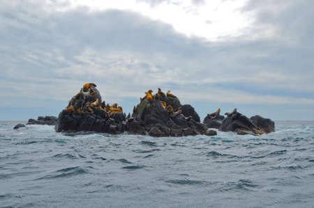 Lobos de mar de Steller  Foto de archivo - 7920540