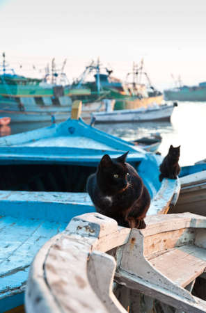 alexandria: Cats sitting on the boat of the Eastern harbor of Alexandria city, Egypt Stock Photo
