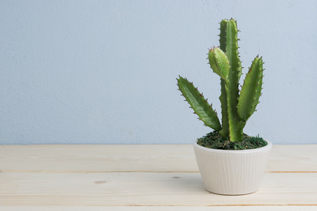 Cactus in the vase decor on wooden table