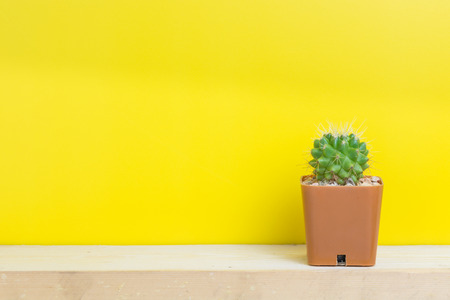 cactus: Cactus pots on the yellow wall. Stock Photo