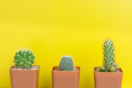 plant pots: Cactus three pots on the yellow wall. Stock Photo