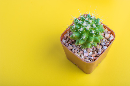 Potted cactus on yellow background Stock Photo