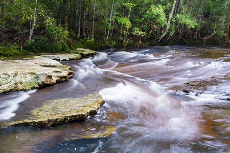 wang: Stream in the tropical forest