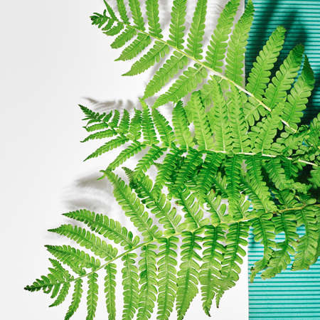 Fern on a white background. Frame with flowers, branches, leaves