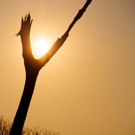 riek: Zon tussen riek van hout op zonsondergang