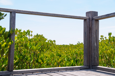 viewpoints: mangrove forest between wood bars from viewpoints