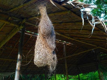 赤ちゃんの織工の鳥、鳥の巣、燕の巣