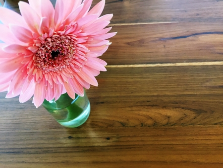 Gerbera, Barberton daisy or Gerbera jamesonii hybrida popular people decorate the house. Stock Photo