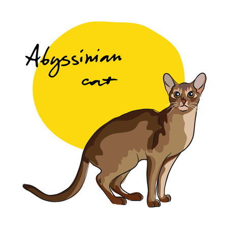 moustached: Abyssinian cat, vector illustration Illustration