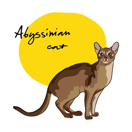 Abyssinian cat, vector illustration Illustration