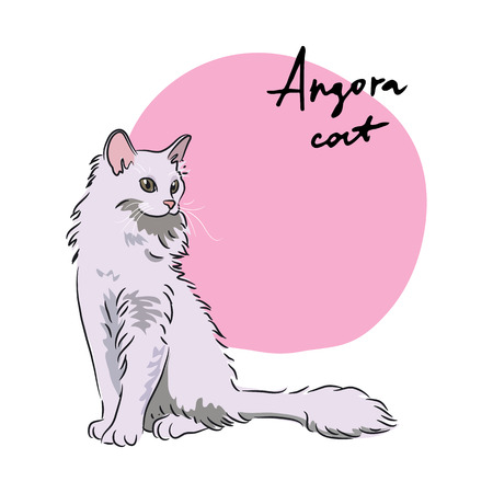 long haired: Angora cat, vector illustration