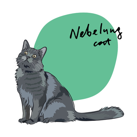 long haired: Nebelung cat, vector illustration