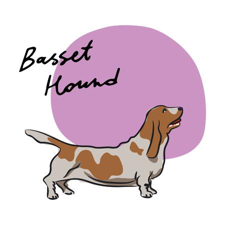 basset hound: Basset Hound, ilustraci�n vectorial