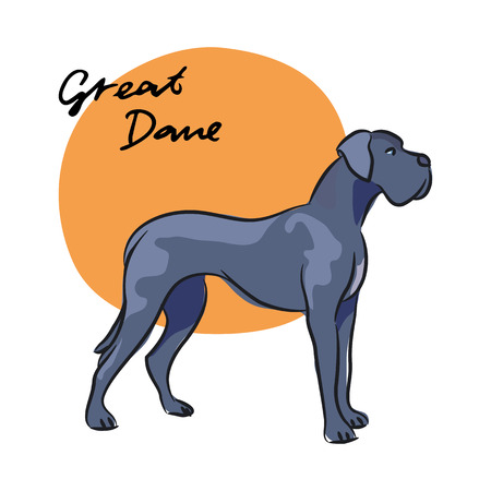Great Dane, vector illustration
