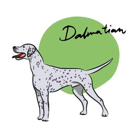 dalmata: Dalmata, illustrazione vettoriale