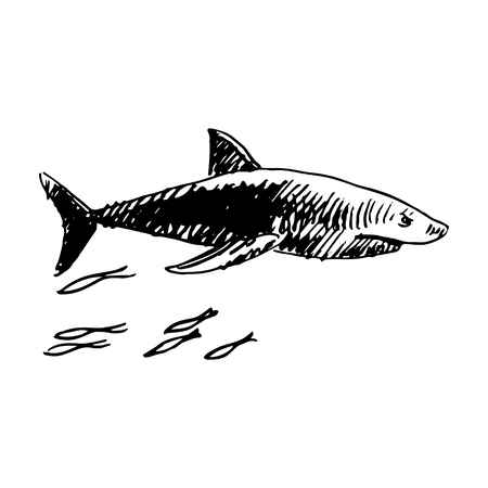 animalistic: Shark. Vector sketch