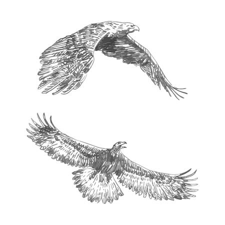 Schizzo a mano libera dell'aquila in volo. Disegnato a mano su sfondo bianco. Illustrazione vettoriale