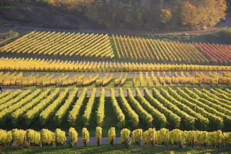 wine viticulture Stock Photo
