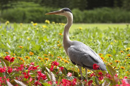 Heron and flowers