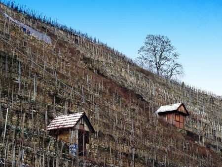vineyard with a house in winter