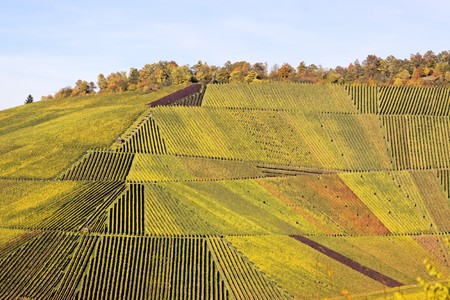 Vineyard in autumn in Stuttgart - Germany Stock Photo