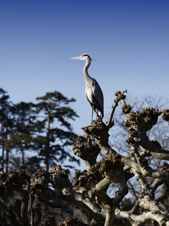 metal post: Great Heron on a metal post