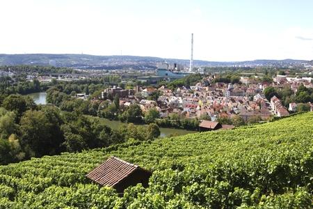 vineyard in bad cannstatt, germany Stock Photo