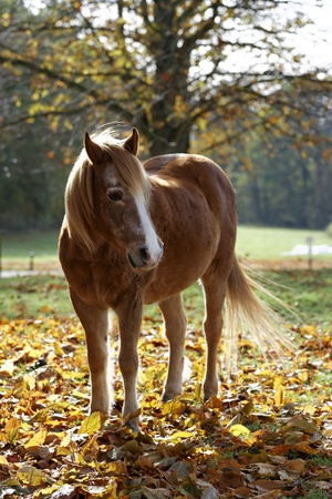 Horse on autumn leaves