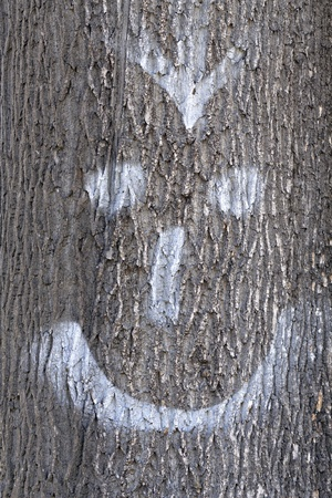 face in tree bark: Face painted on the bark of a tree